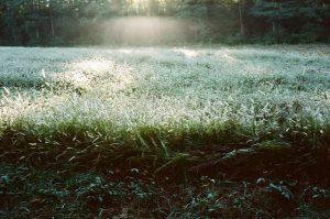 Aurore lumineuse sur un champ